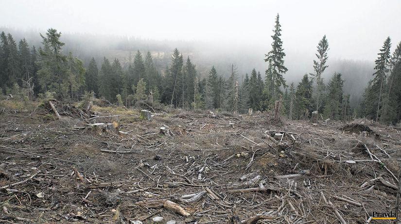 les, kalamita, lykožrút, kalamitná ťažba dreva