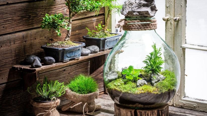 rastlina, pohár, minizáhrada, rastliny