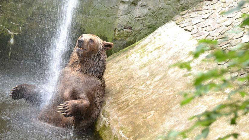 ZOO, Bratislava, Zviera, medveď, sprcha, bazén