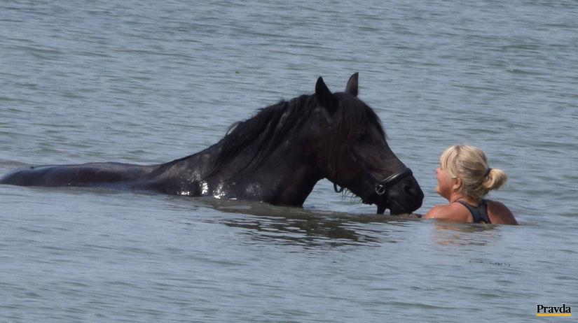 počasie, kúpanie, kôň,