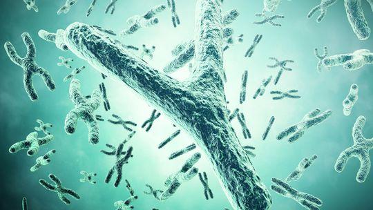 chromozom-shutterstock 476984311