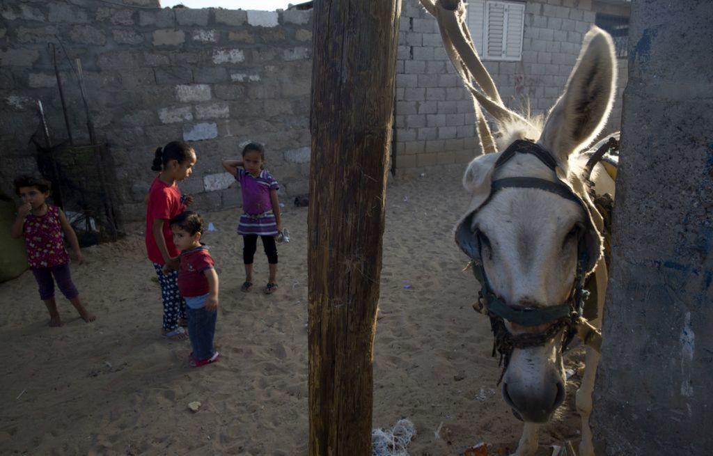 Palestínci, deti, oslík,