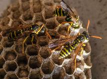 včely, úľ