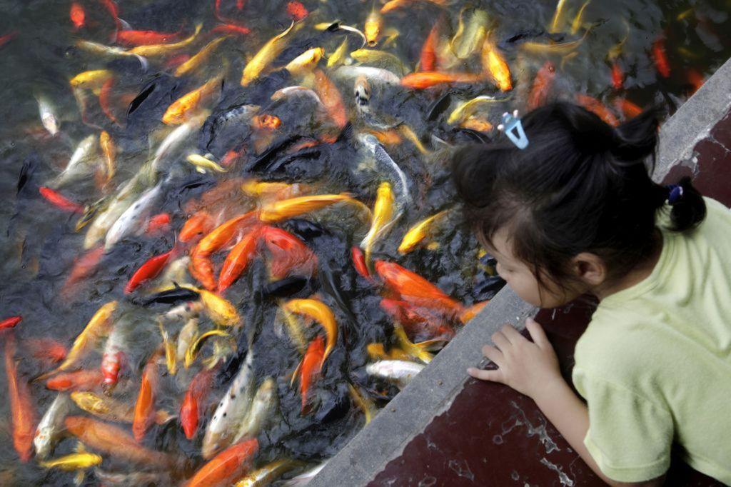 ryby, Čína