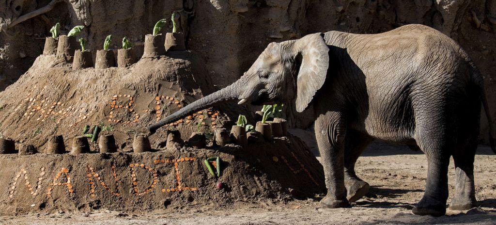 slon, oslava, narodeniny