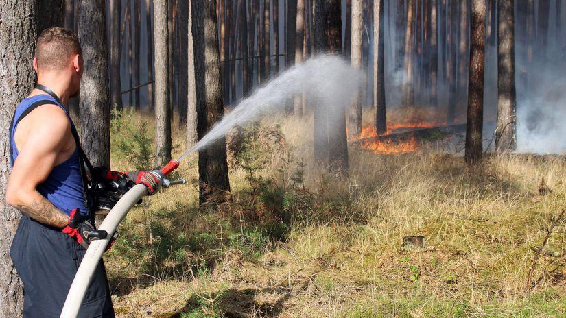 hasič, požiar, les