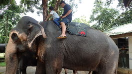 vozenie sa na slonovi v Millenium Foundation