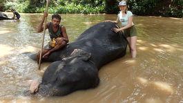 kupanie slona