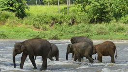 slony v rieke Ma Oya3