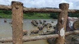 slony v rieke Ma Oya2