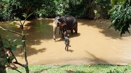 umyvanie slona