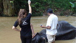 slonovi infuzia