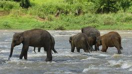 slony v rieke