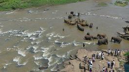 slony v rieke Ma Oya v Pinnawale