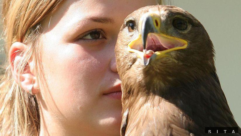 Poľovnícke slávnosti Dni svätého Huberta, vták,...
