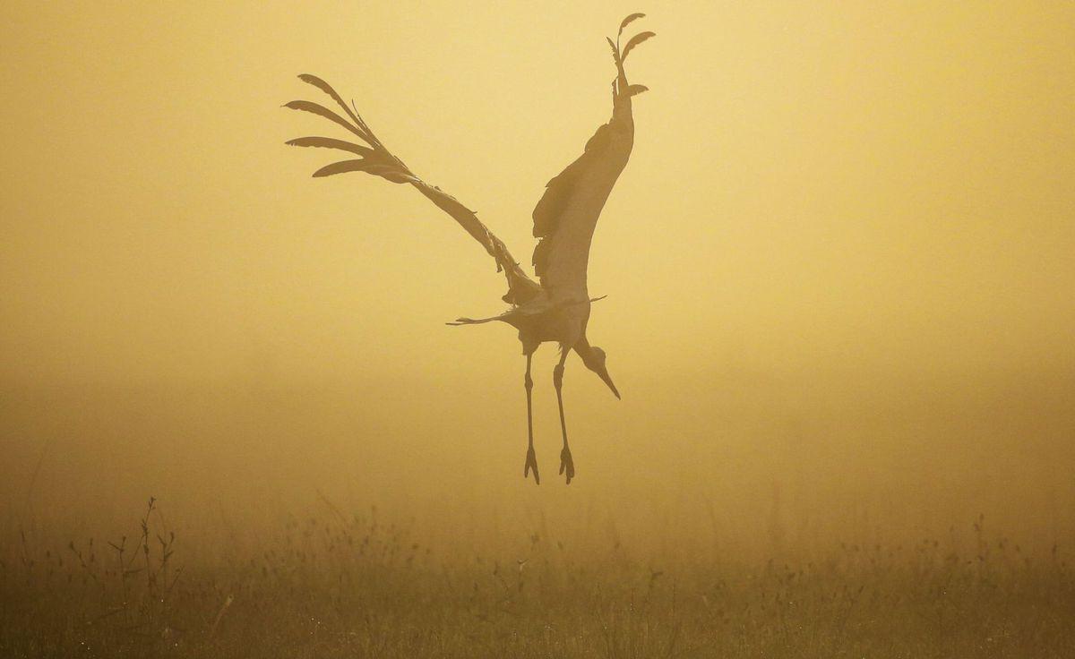 vták, bocian