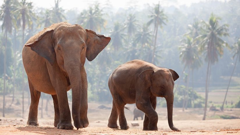 Slony, India
