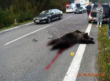 Vodič sa vyhýbal zrazenému medveďovi, neprežil zrážku s kamiónom