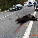 Tragická dopravná nehoda