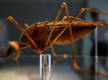 malária, komár, anopheles, anofeles