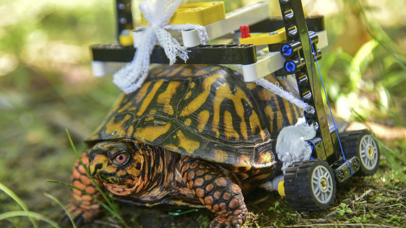 Lego Wheelchair-Turtle