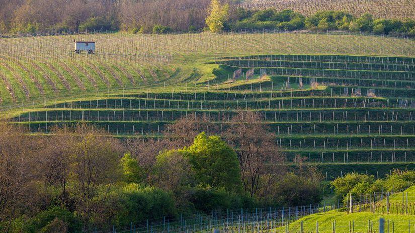 vinohrady, Bojničky