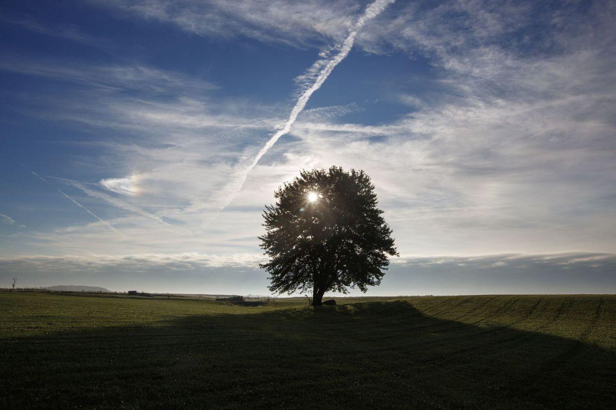 Indiana, strom, príroda, javor