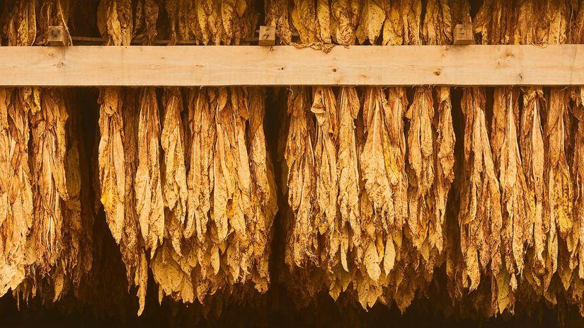 tabak, tabakové listy