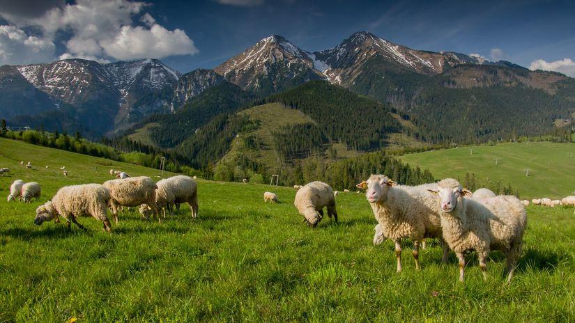 ovce, hory, poľnohospodárstvo