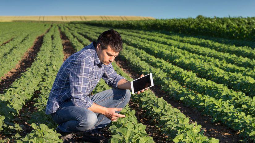 pôda, pozemky, farmár, zelenina, poľnohospodárstvo
