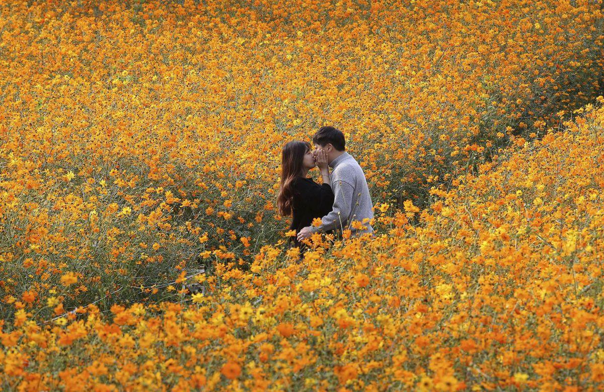 dvojica, láska, bozk, rande, kvety, Soul, Kórea