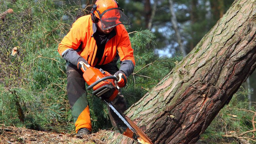 ťažba dreva, lesy,