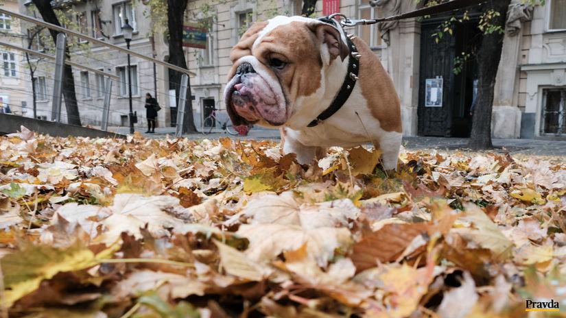 počasie, jeseň