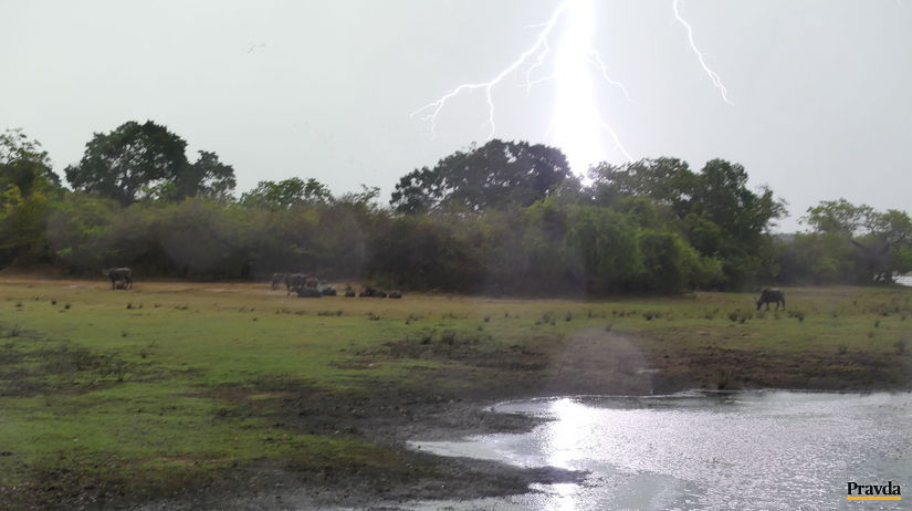 Kumana národný park Srí Lanka