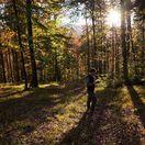 Les, Tomčík,