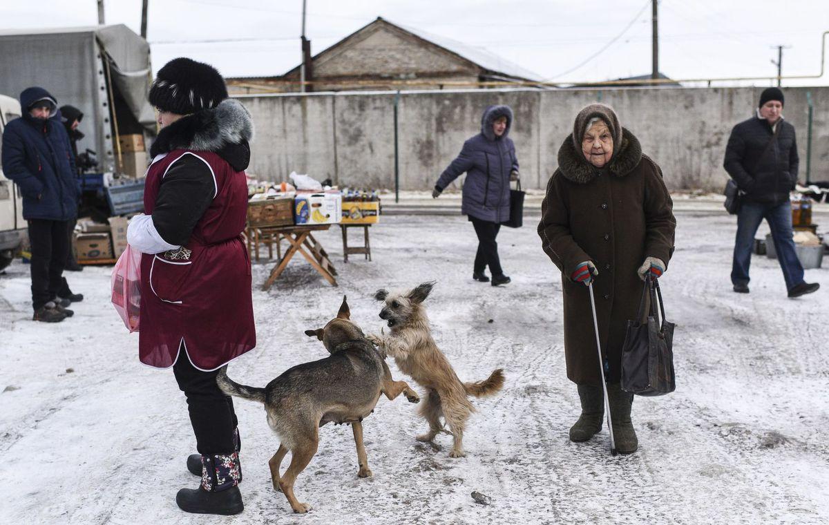 Ukrajina, trh, zima, sneh, Luhansk, psy