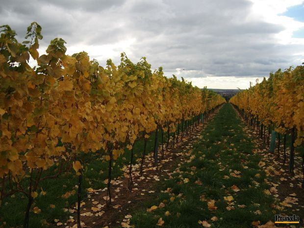 Osudové vína zaniknutej krajiny