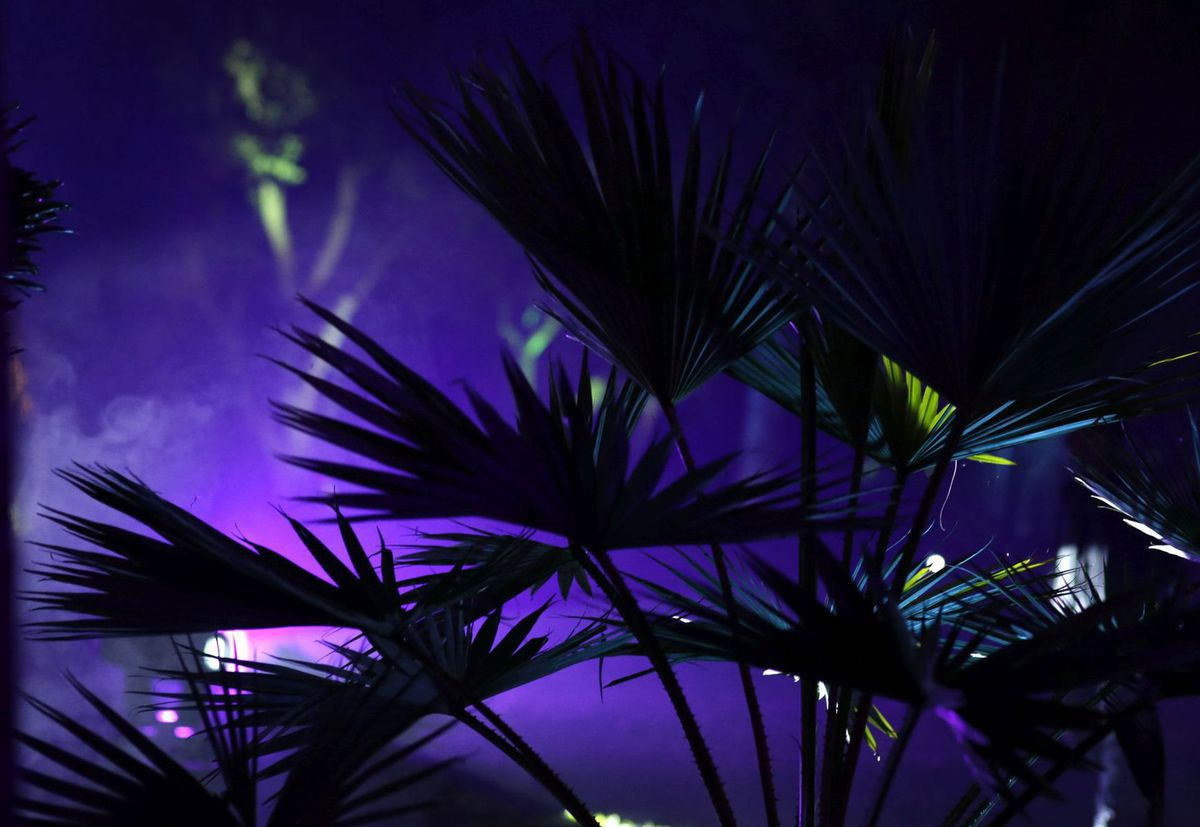 Florida, botanická záhrada, palmy, exotika,
