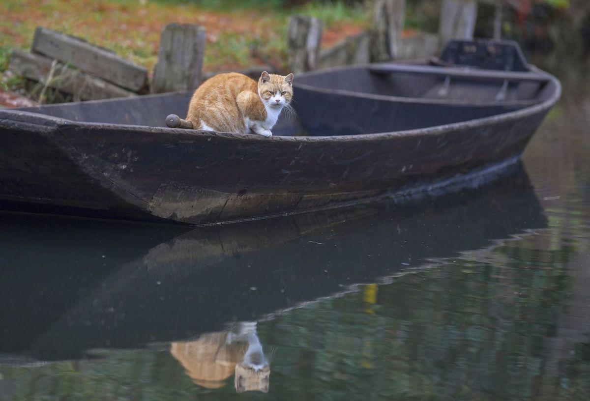 Nemecko, loď, čln, mačka