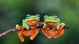 Zoznamka žaba