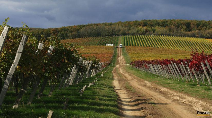 Farbami jesene vymaľovaná vinica Chateau Topoľčianky.