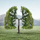 strom, príroda, pľúca,