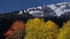 Donovaly, sneh, príroda, les, stromy, jeseň, zima