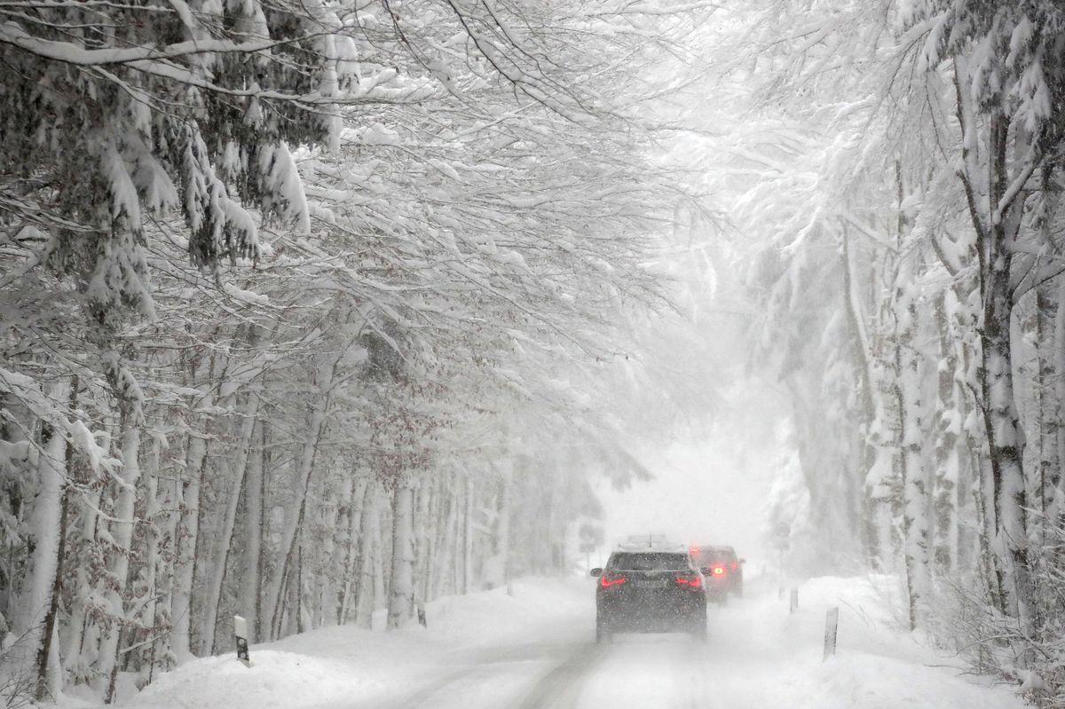 Sneh, kalamita, auto, stromy