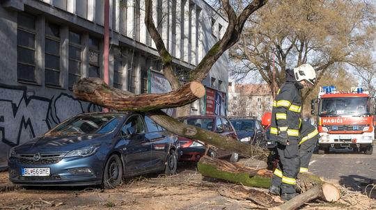 VIDEO  Vietor v Bratislave vyvracal stromy - Regióny - Správy ... 3ffede20d51
