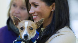 Tehotná vojvodkyňa Meghan a pes Minnie z rasy Jack Russell pózujú fotografom na charitatívnej akcii na pomoc zvieratám v Londýne.