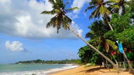 Srí Lanka, more, Tangalle, pláž, palma