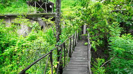 Srí Lanka, domček na strome, mostík