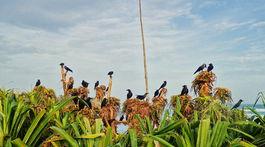 Srí Lanka, Mirissa, polostrov, zeleň, vrany