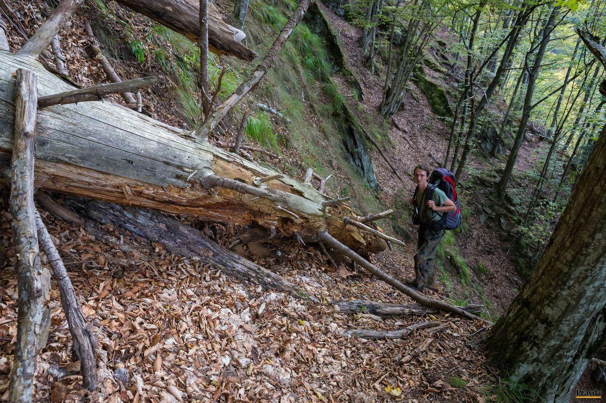 Martin Mikoláš v rumunskom pralese Boia Mica.